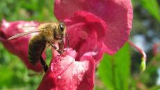 """Synoptyk zapowiada: będzie ciepło. """"Pszczoły nie mogą się mylić!"""""""