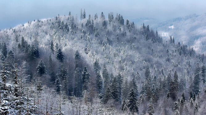 Prognoza pogody na pięć dni: <br />wraca silny mróz. Poprószy śnieg