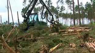 Lasy sprzedają powalone drzewa. Drewno tanieje z każdym dniem