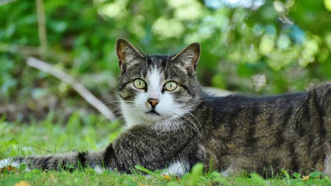 """Koty zagrażają ptakom i ssakom. Tylko w Polsce """"zabijają miliony kręgowców rocznie"""""""