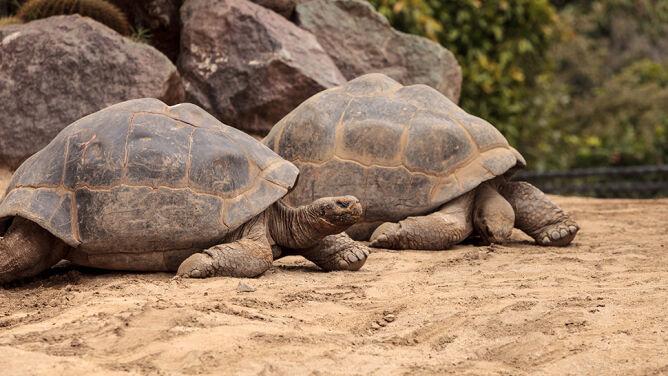 Na Galapagos nie będzie fajerwerków. <br />W trosce o zwierzęta